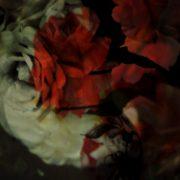 sonya-pletes_seduction_225x300_lr-768×1024